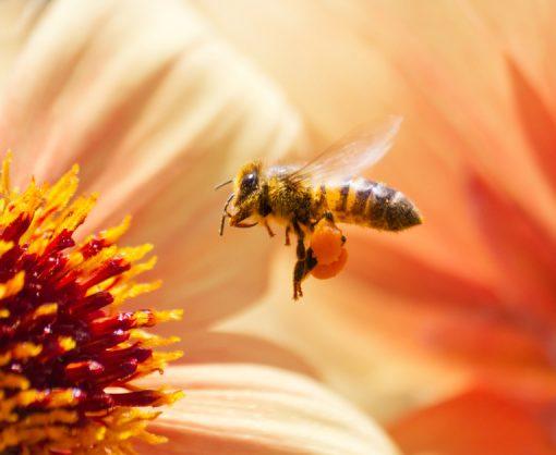 דבש איכותי מפרחי בר